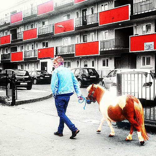 Man takes tiny horse for a walk in The Liberties